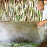 Cocina Maya