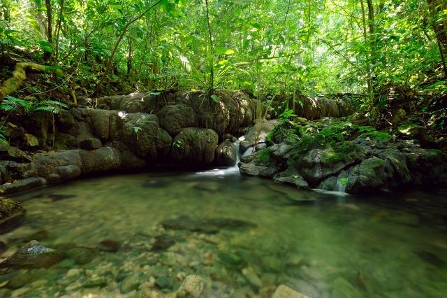 biosfera-de-la-sierra-de-manantlc3a1n-una-reserva-de-manantiales-para-visitar-en-costalegre